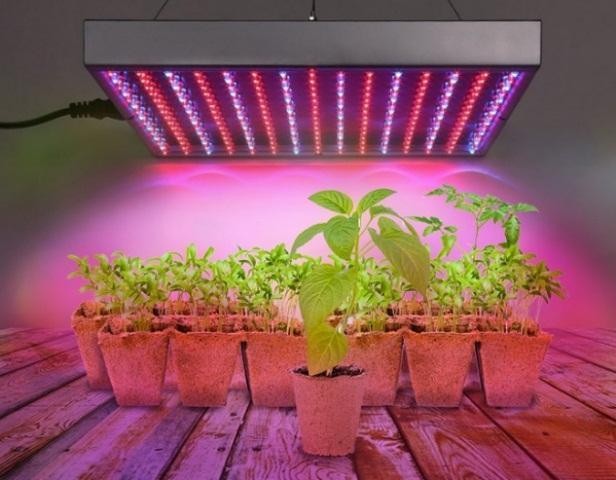 Как выращивать в теплице