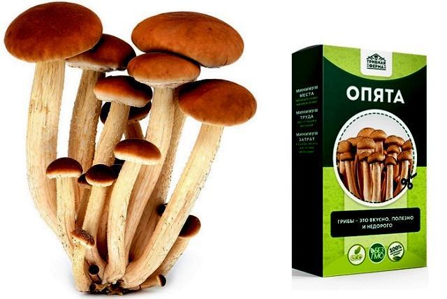 как вырастить грибы