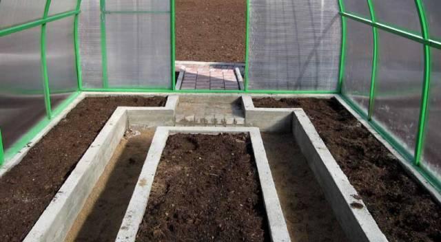 Как вырастить помидоры в теплице Земля для томатов