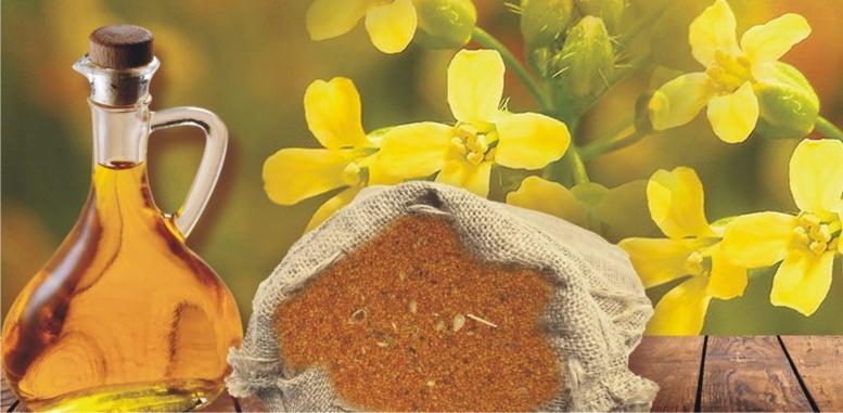 Самое полезное для здоровья растительное масло: Рыжиковое
