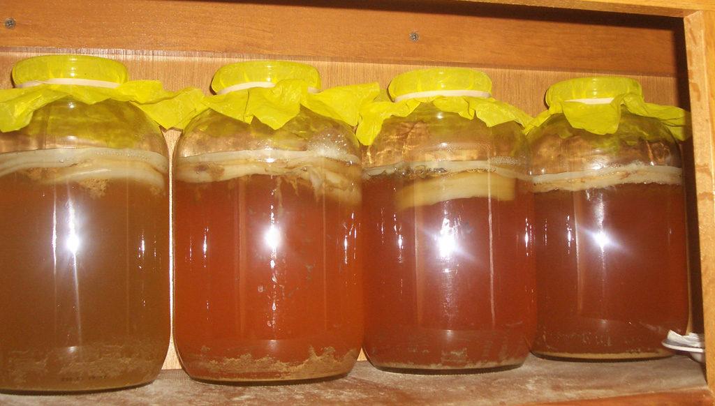 Рецепты приготовления настоя чайного гриба