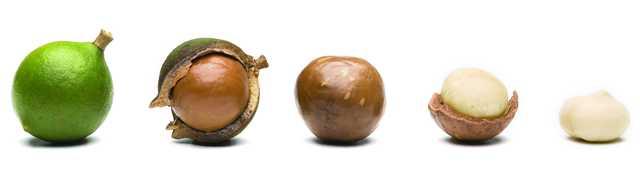 макадамия: польза и вред для организма при похудении
