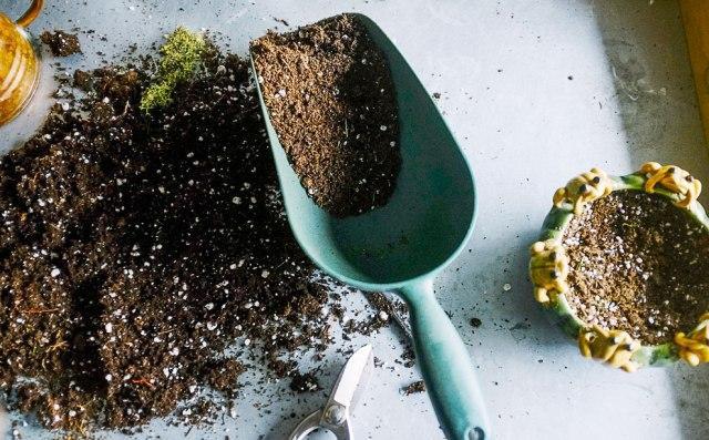 Почва и контейнеры для посева семян лаванды