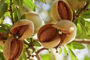 орехи миндаль