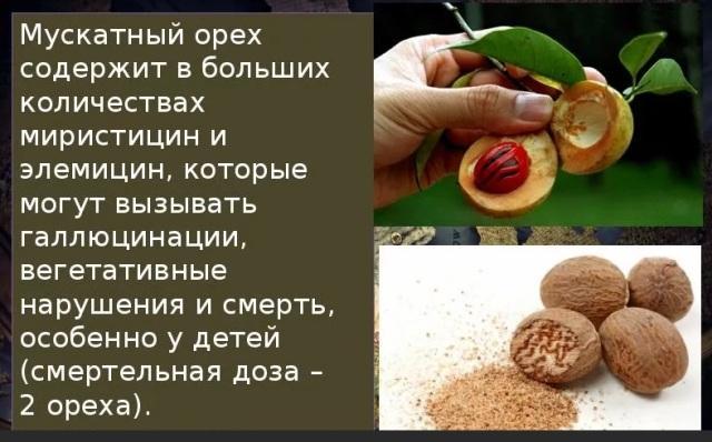 Противопоказания мускатного ореха