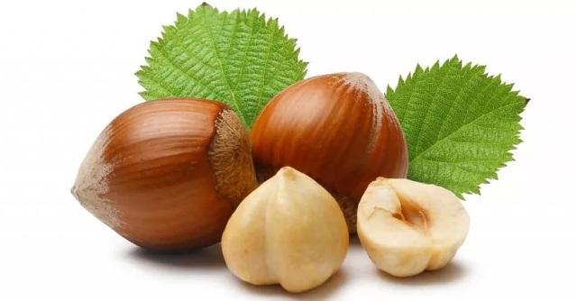 Лесной орех польза и вред