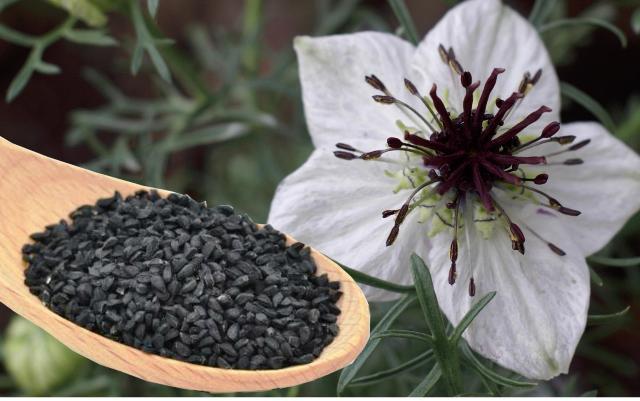 Калорийность и пищевая ценность черного тмина