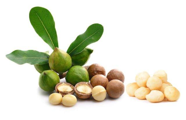 Полезные свойства, калорийность макадамии