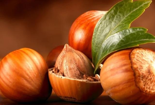 Орех фундук: польза и вред для организма