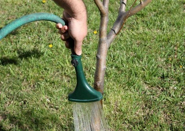 Обработка фитоспорином кустарников и деревьев
