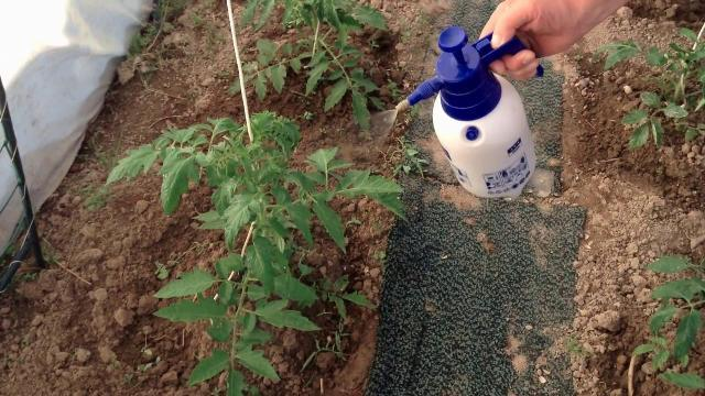 как применять фитоспорин для растений