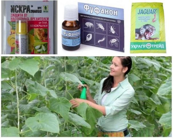 Как избавиться от тли в огороде навсегда биологичесие препараты