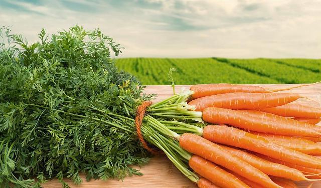 Когда сажать морковь в открытый грунт весной