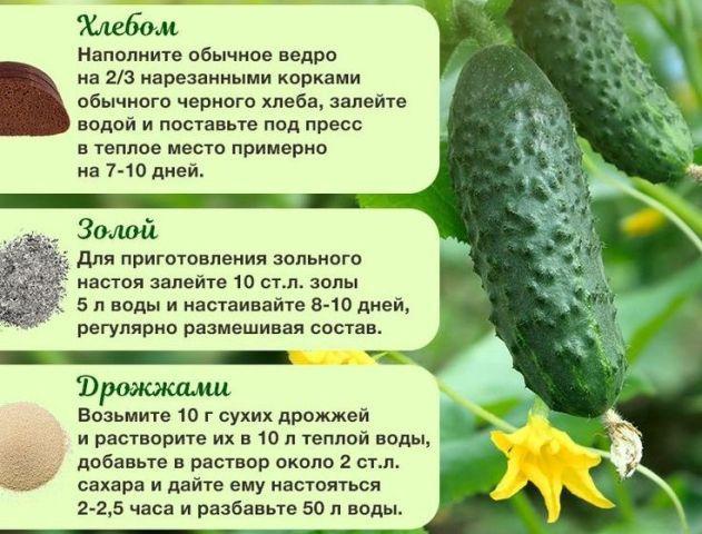 Чем подкормить огурцы