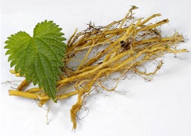 фото: корень крапивы