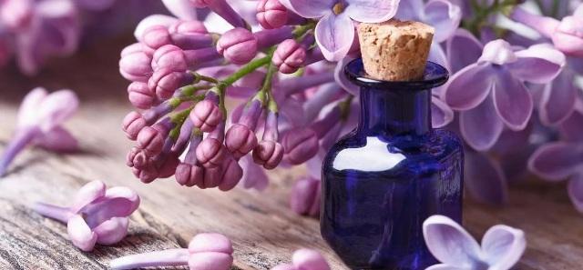 Лечение варикоза цветами сирени