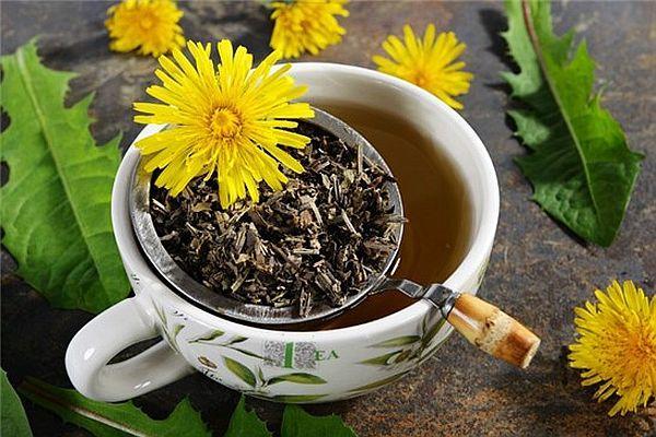 Отвар и чай из корней одуванчика