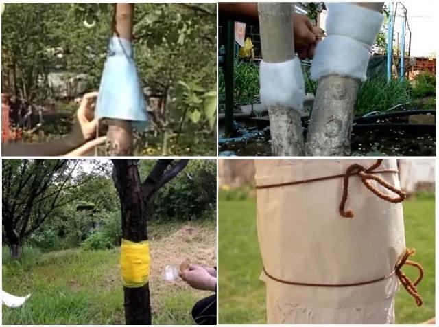 Как избавиться от тли в огороде навсегда приманками и ловушками