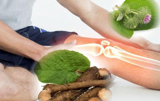 Лопух: целебные свойства при лечении суставов