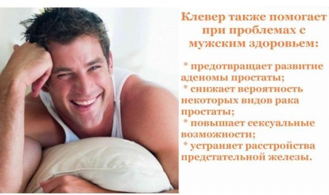 Клевер красный: лечебные свойства для мужчин
