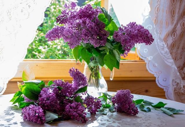 Цветы сирени: лечебные свойства и противопоказания  при туберкулезе легких
