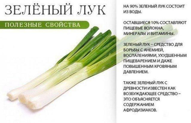 полезные свойства зеленого лука