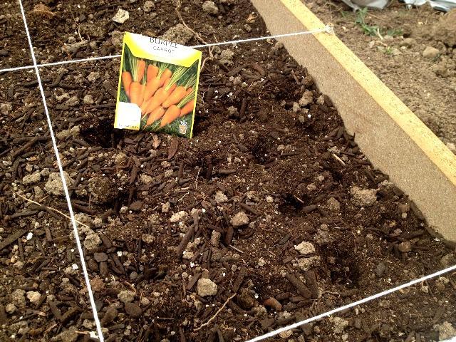 Способы посадки моркови весной
