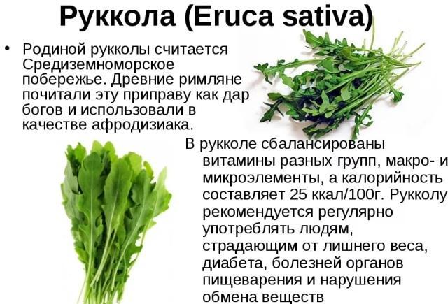Салат руккола: полезные свойства и противопоказания