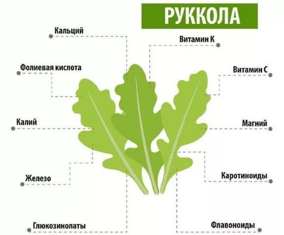 Салат руккола: химический состав