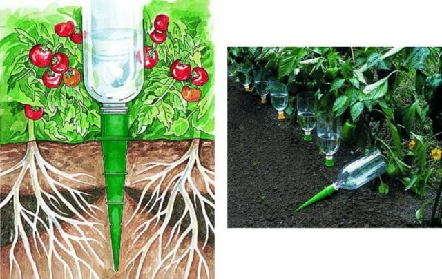 Как сделать прикорневой капельный полив из пластиковых бутылок своими руками