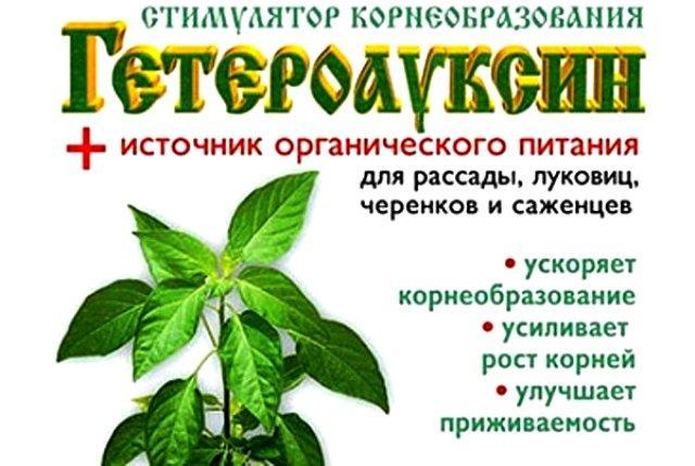 Гетерауксин - стимулятор корнеобразования