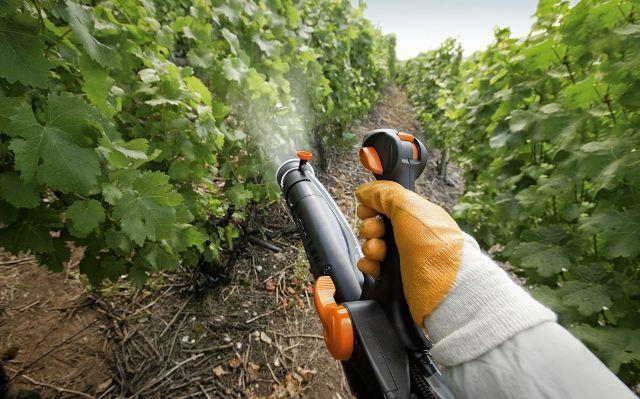 Опрыскивание винограда с удобрением