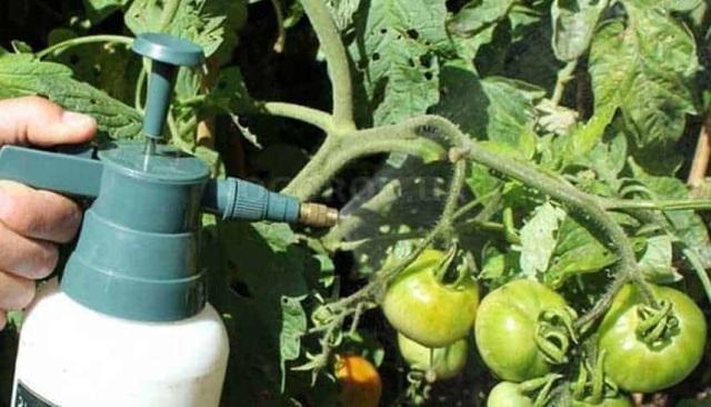 Йод для растений как удобрение для томатов