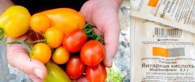 Чем подкормить помидоры с закрытой корневой системой