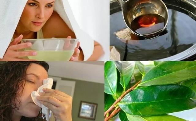 Лавровый лист: лечебные свойства и противопоказания при насморке