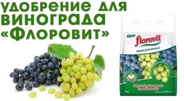 Летняя подкормка винограда