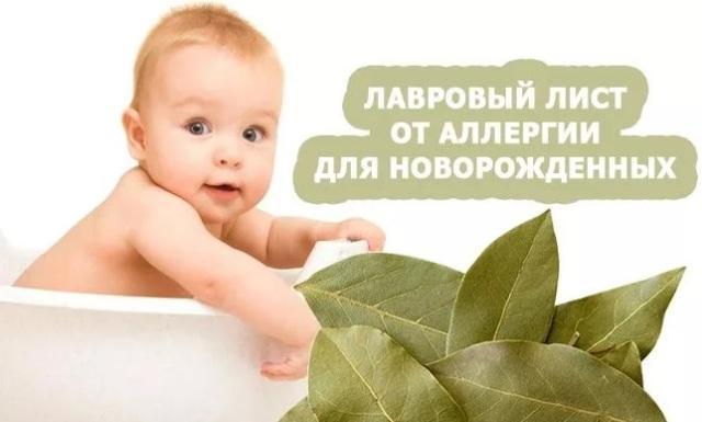 Лавровый лист: лечебные свойства и противопоказания при дерматите у грудничков