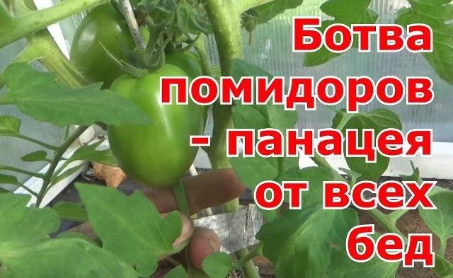 Блошки на капусте: обработать в домашних условиях отваром ботвы помидоров