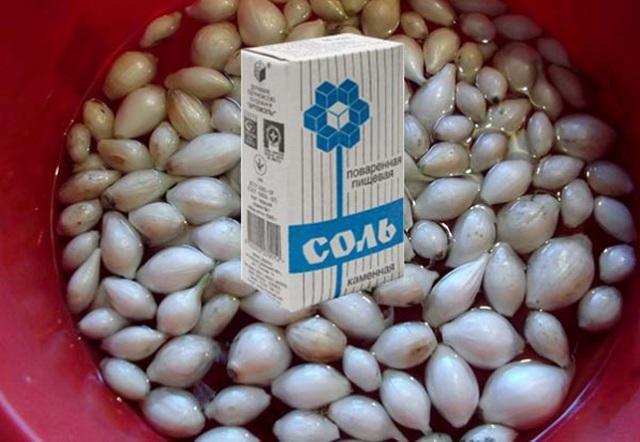 замачивание лука в растворе соли