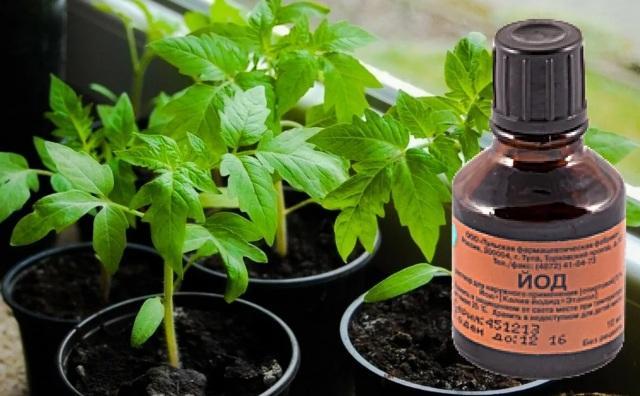 Йод для растений как удобрение для рассады