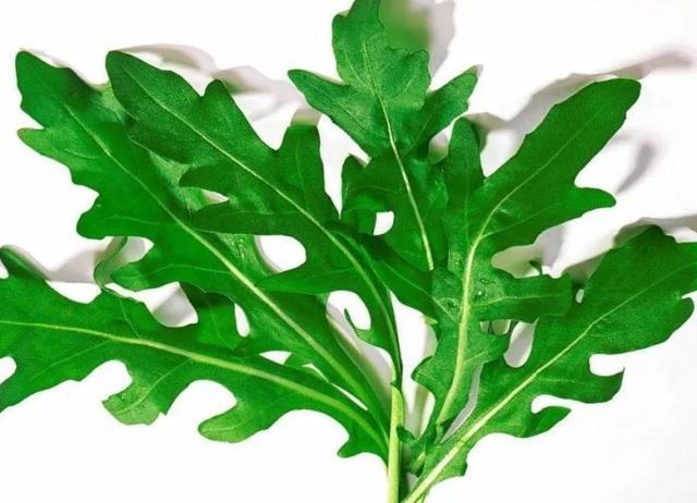 Салат руккола: описание