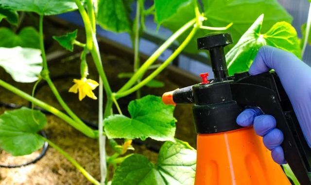 Правила применения йода для подкормки растений