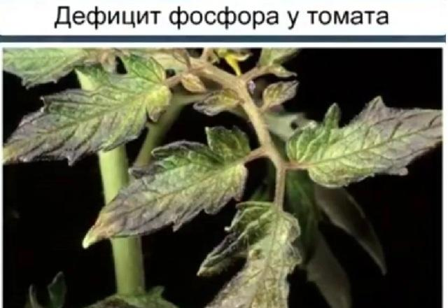 Чем подкормить помидоры при дефиците фосфора