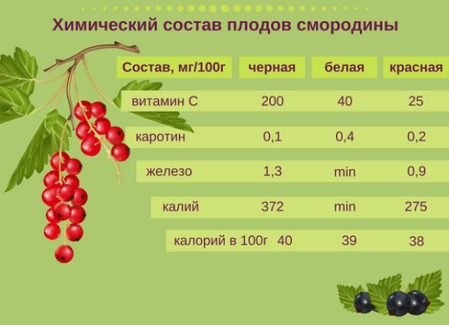 Состав ягод черной и красной