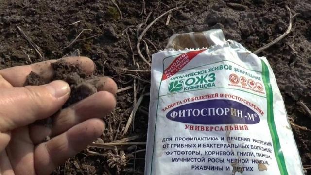 обработка грунта «Фитоспорином».