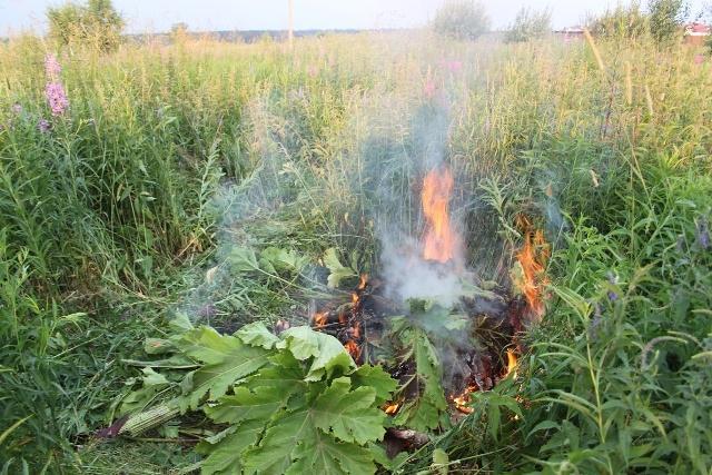 Как вывести с участка: выжигание