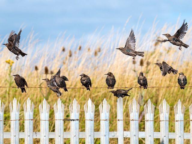 Как спасти урожай от птиц