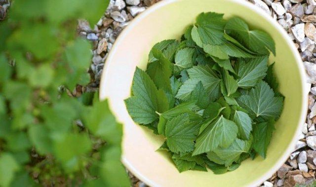 Маринованные листья : рецепт