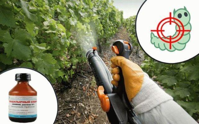 Нашатырный спирт как удобрение для растений от вредителей