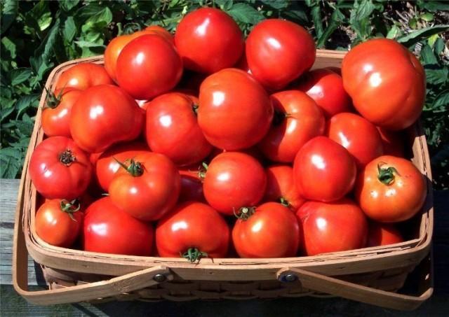 помидоры в корзине